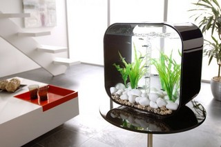 biorb aquarium kopen of niet en nog veel meer. Black Bedroom Furniture Sets. Home Design Ideas